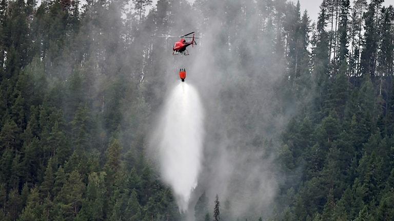 En helikopter bekämpar en brand. Foto: Robert Henriksson.
