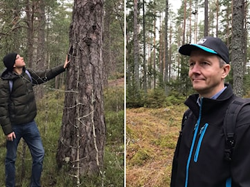 Skogsutredning ska ge svar på laddade frågor