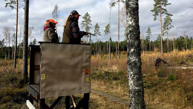 Rådjursjakt i I2-skogen Karlstad