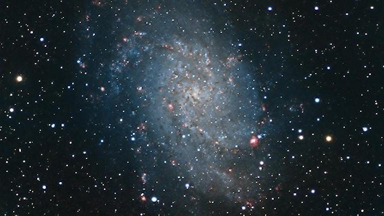 Bild av galaxen M33. Foto: Daniel Sundström.