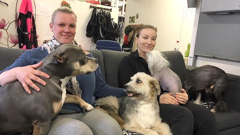 Malin Nilsen och Anna Söderlund och flera hundar. Foto: Jenny Tibblin/Sveriges Radio.
