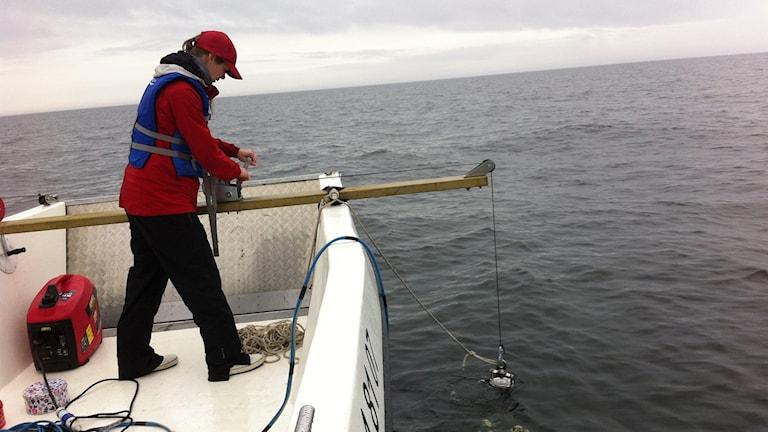 Anna Rotander vid Örebro Universitet arbetar med provtagning av mikroplaster ute i Värmlandssjön på Vänern.