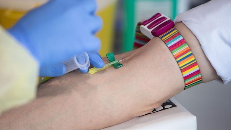 närbild på när ett blodprov tas på en arm