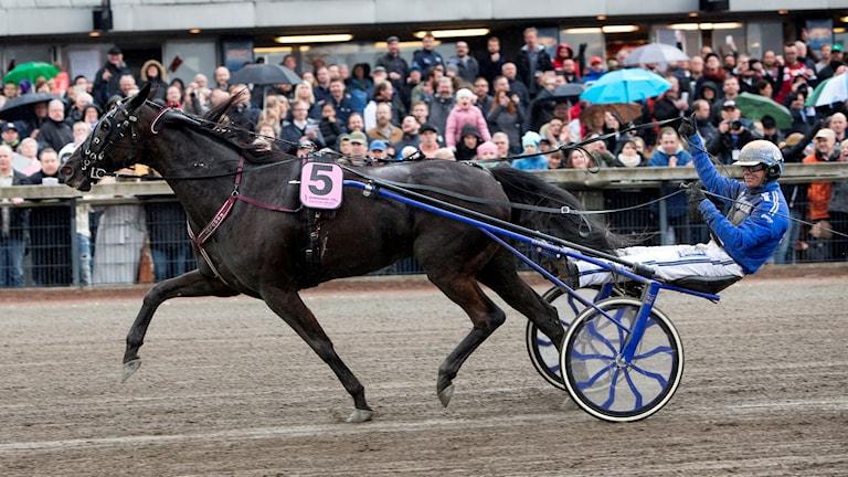 Hästen Your Highness med Björn Goop. Foto: Frida Winter/TT.