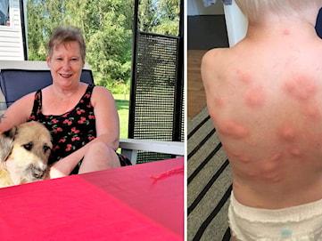 Efter åratal av myggplåga - bekämpningen lyckad