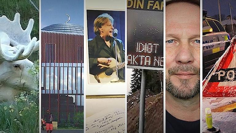 Älg, moské, S-E Magnusson, HG Storm, Polis, trafikskylt. Foto: Hans Nilsson och Sveriges Radio