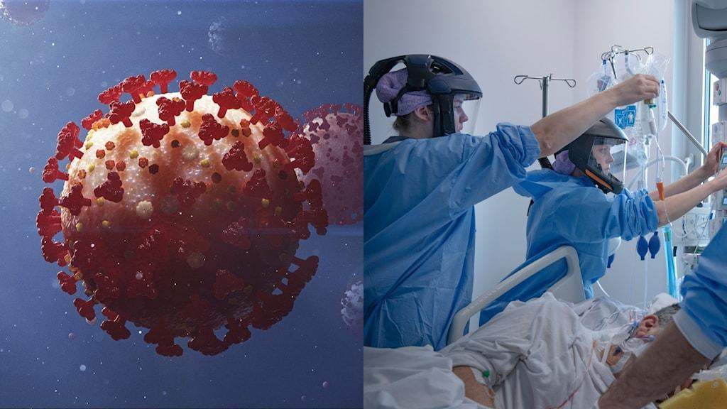 Bild på coronaviruset och en akutmottagning.