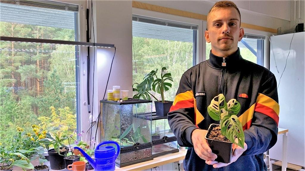 Man står i växtrum med en växt i händerna. Foto: Viktoria Svärd Karlsson/Sveriges Radio.