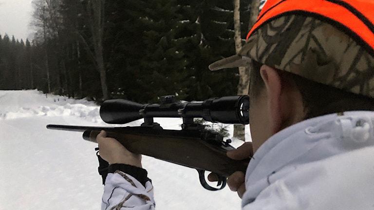 En jägare siktar med ett vapen. Foto: Louise Uhlin/Sveriges Radio.