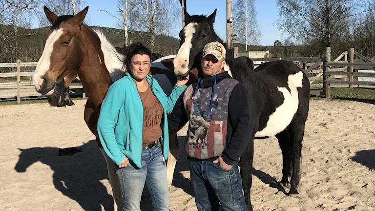 två personer står med hästar i en paddock