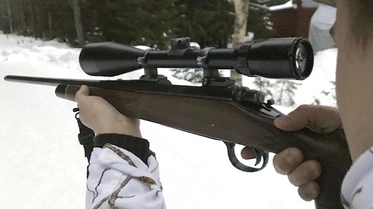En jägare håller i ett vapen och siktar. Foto: Louise Uhlin/Sveriges Radio.