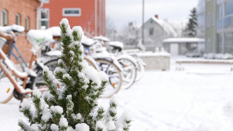 Snö jul gran