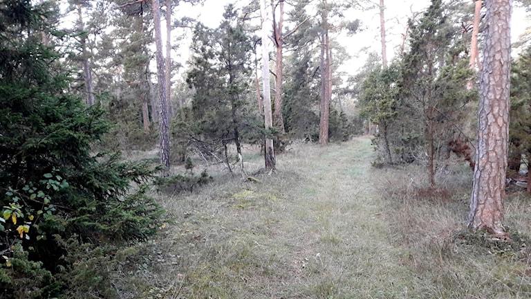 Naturreservatet Maldes i Stånga
