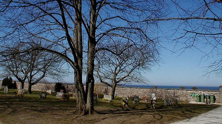 Norra kyrkogården i Visby mot havet. Foto: Henrik Wallenius/SR Gotland