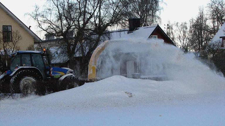 Snöslunga. Foto: Katarina Hedström/SR Gotland