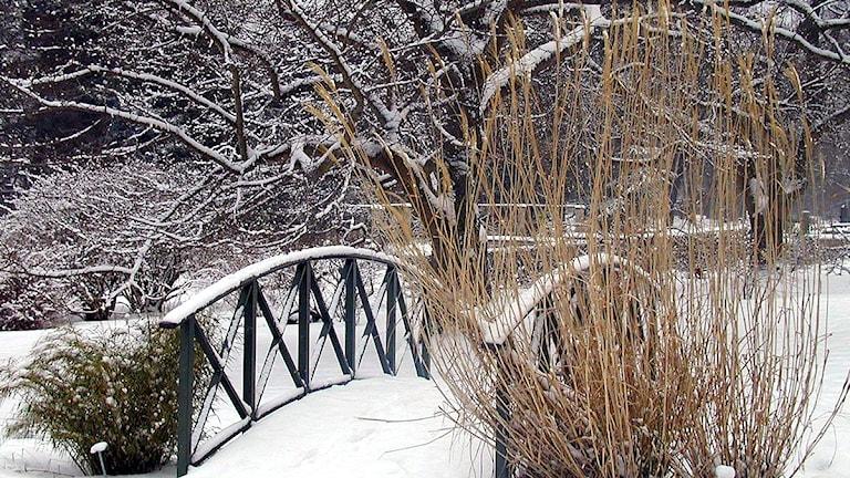 Botaniska trädgården i Visby på vintern.