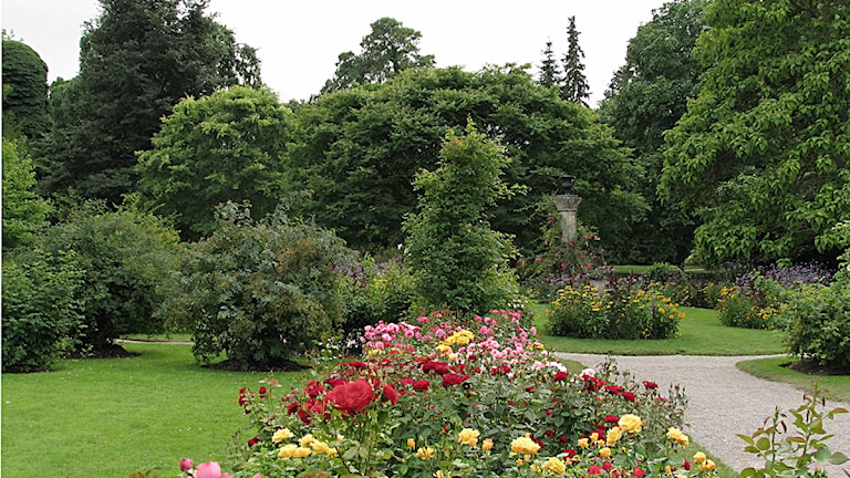 DBW:s Botaniska trädgård i Visby. Foto: Henrik Wallenius/SR Gotland