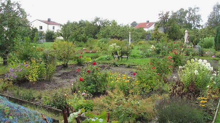 Koloniträdgårdar som tillhör lägenheterna vid Lännaplan i Visby.
