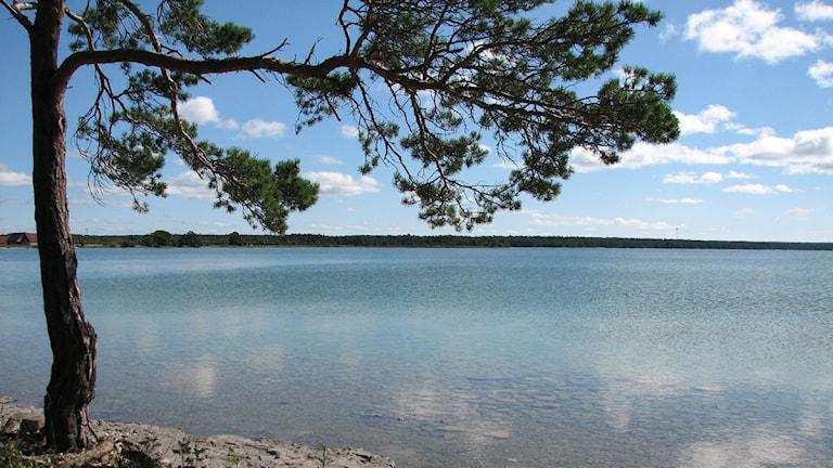 Bäste träsk. Foto. Jonas Neuman SR/Gotland