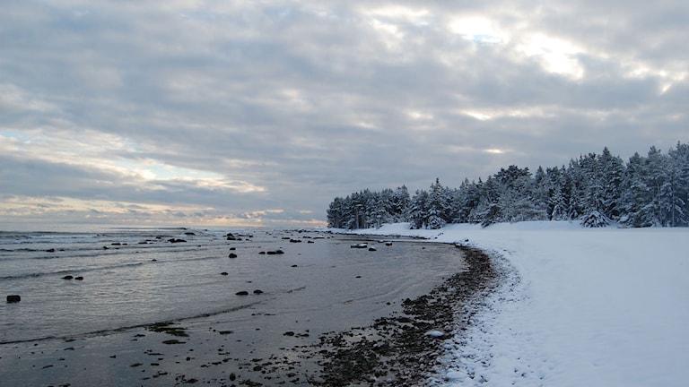 Skogen möter stranden på naturreservatet Bungenäs. Foto: Aktiebolaget Bungenäs Kalkbrott