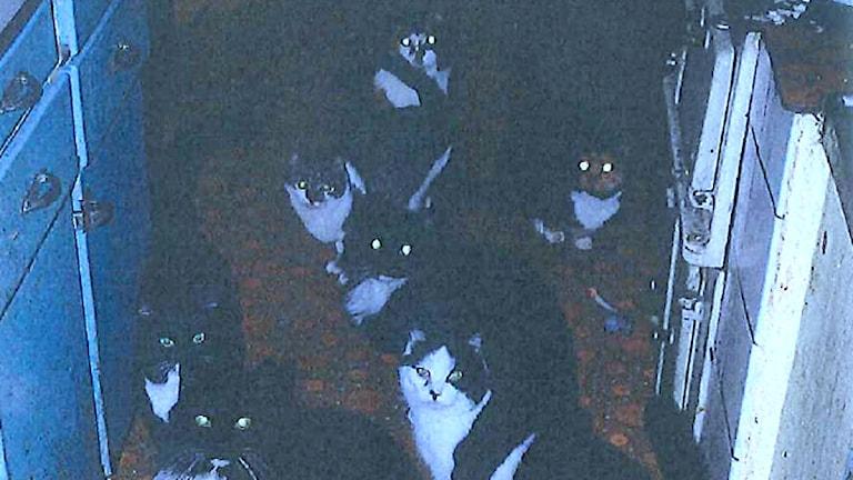 Katttter i köket. Foto ur länsstyrelsens inspektionsrapport