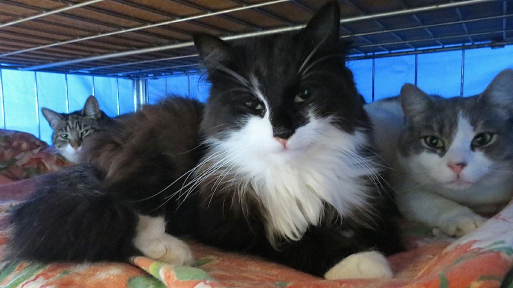 På katthemmet finns många små bäddar och sovplatser för dom över 100 katterna som bor där/Foto Mari Winarve