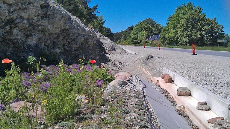 Cykelleden mellan Lummelunda och Visby. Foto: Karin Brindt/SR Gotland