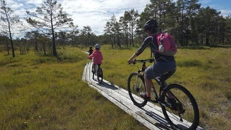 Gotland Bike Park