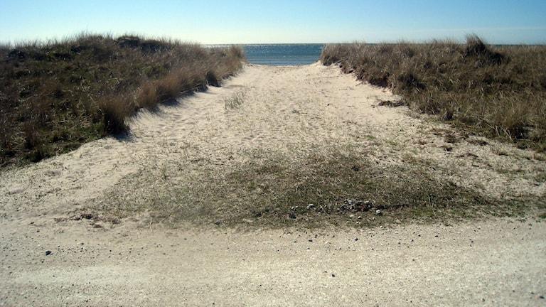 Bortschaktad strandvall. Foto: Länsstyrelsen i Gotlands län
