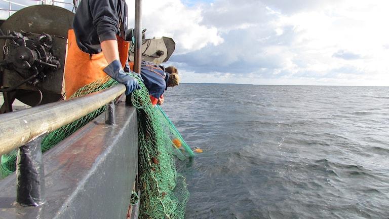 Fiske. Foto: John Almqvist/Sveriges Radio