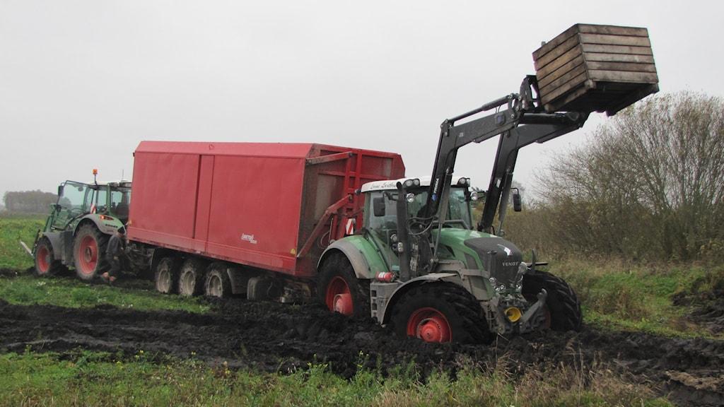 I Mästermyr hade bröderna Lorin kört fast med sin traktor mitt i morotsskörden. Foto: Mari Winarve/Sveriges Radio
