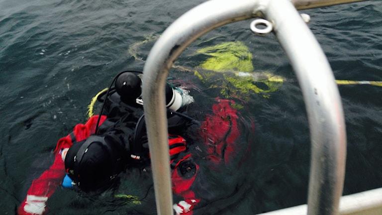 Jim Hansson dyker.