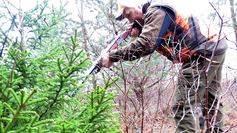 Jägaren Johan Thomsson skjuter julgran. Foto: Håkan Erlandsson/Sveriges Radio.
