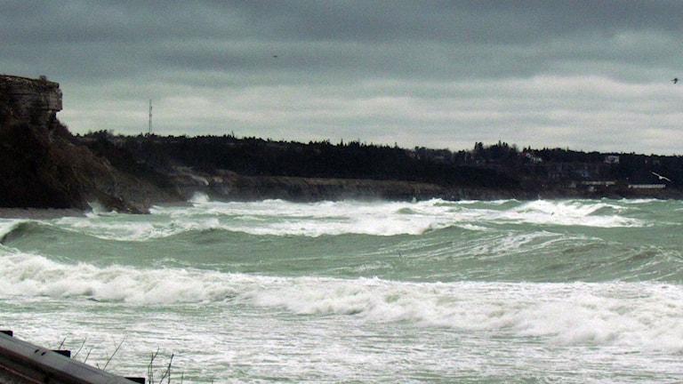 Stormigt hav. Foto: Tomas Ardin/Sveriges Radio