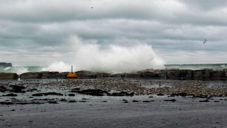 Stormvågor. Foto: Tomas Ardin/Sveriges Radio