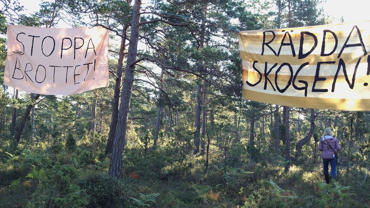 Protestbanderoller i Ojnareskogen. Foto: Cristina Jardim Ribeiro/Sveriges Radio