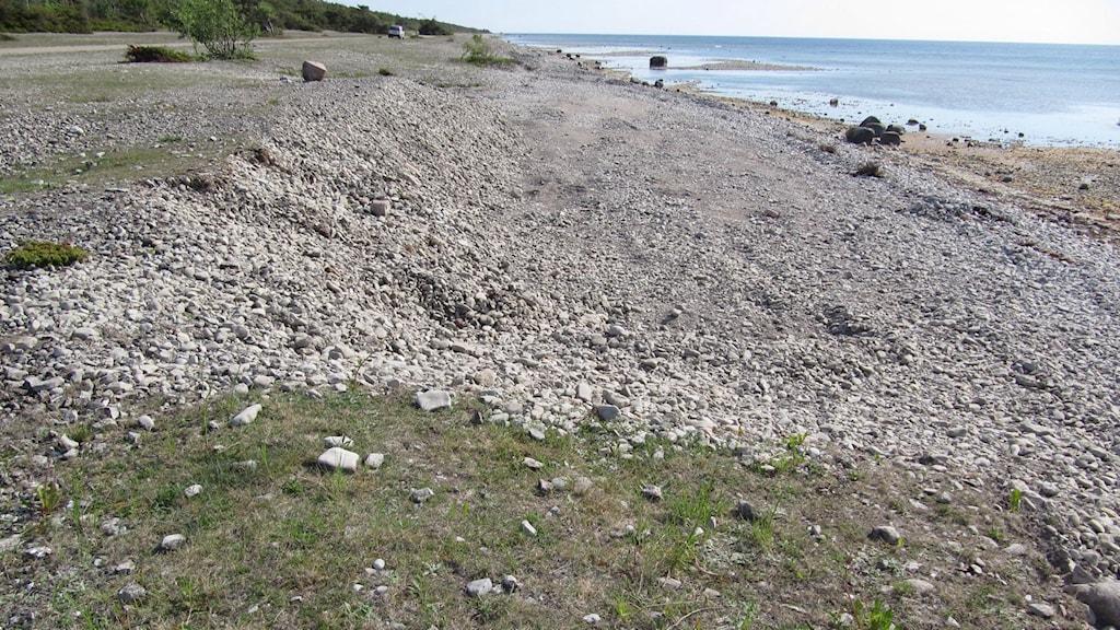 Grustäkt i naturreservat i Eksta. Bild: Länsstyrelsen