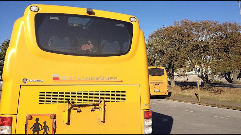 Gotlandsbussar. Foto: Mika Koskelainen/Sveriges Radio Gotland