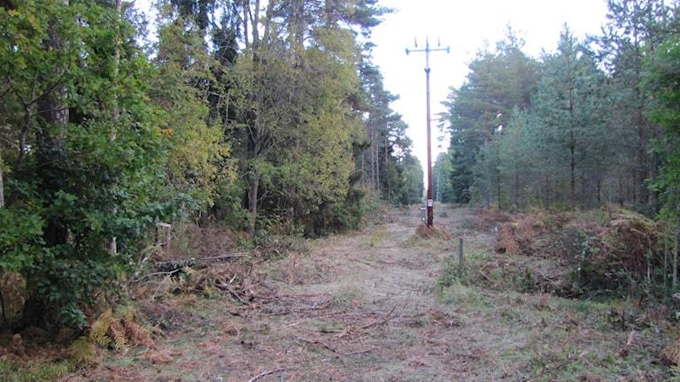 Skogsröjning av GEAB