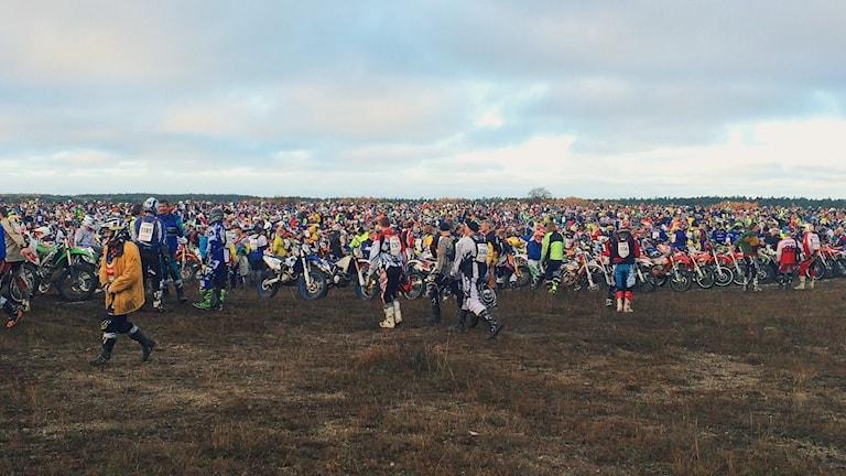 Starten i Gotland Grand national 2015. Foto: Hanna Sihlman/Sveriges Radio