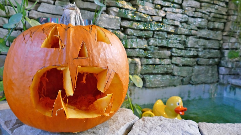 Halloweenpumpa. Foto: Mika Koskelainen/Sveriges Radio
