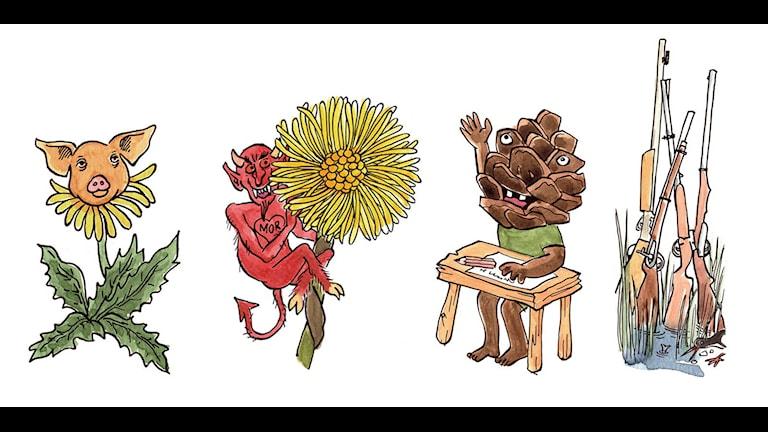 Bosse Carlgrens illustrationer av växters namn på gutamål.