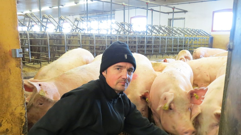 Niklas Hermansson, Havor gård. Foto: Anna Jutehammar/Sveriges Radio