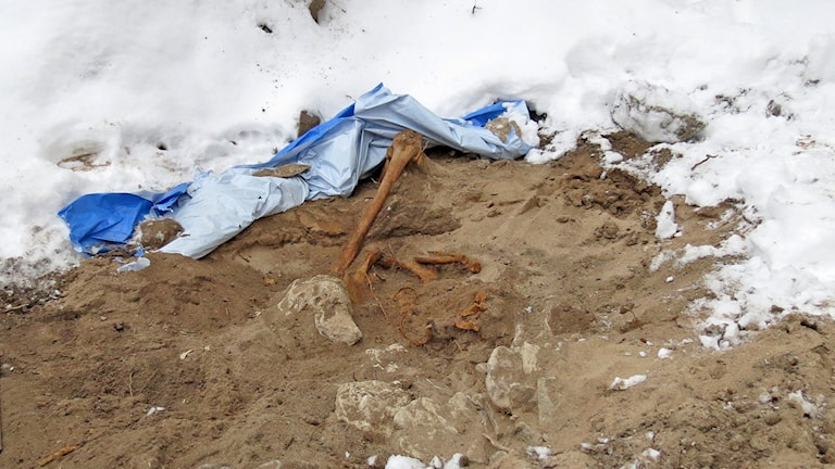 Vikinga skelettgrav i Visby innerstad. Foto: Jack Lantz/Sveriges Radio