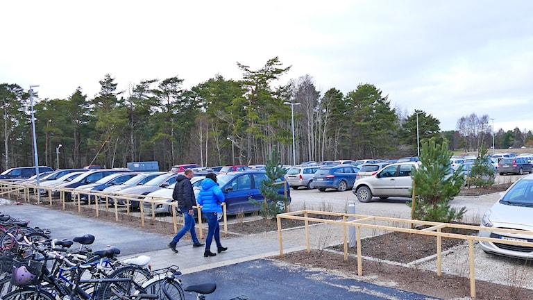 Parkerade bilar. Foto: Tomas Ardin/Sveriges Radio