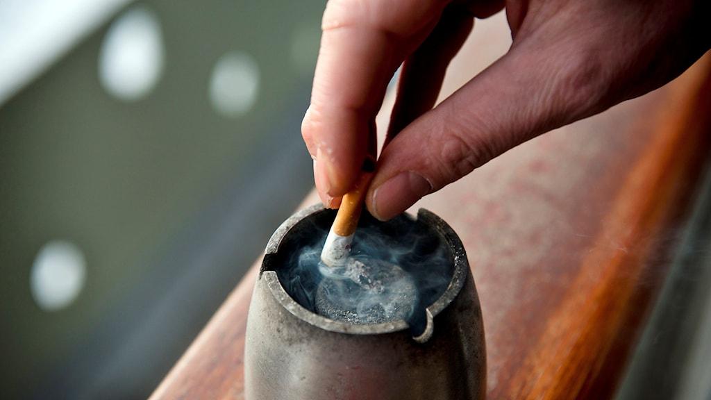 Fimpar cigarett Foto: Fredrik Varfjell/TT