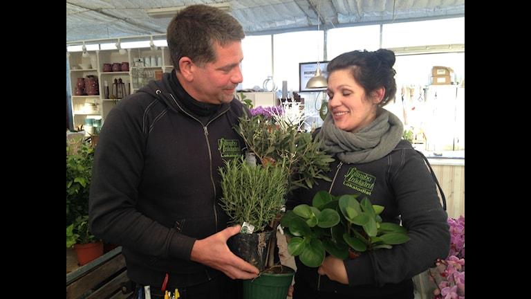 Patrik Roos och Jennie Leksäther med sina favoriter: rosmarin, peperomia och ett olivträd