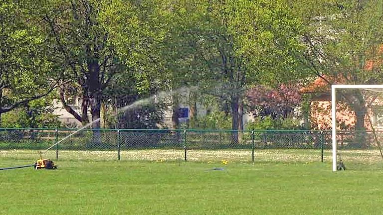 Bevattning på idrottsplats. Foto: Jonas Neuman/Sveriges Radio