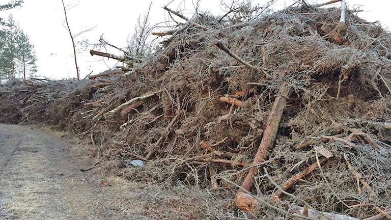 Hög med fällda träd som ska bli flis framöver. Foto: Gunnel Wallin/Sveriges Radio