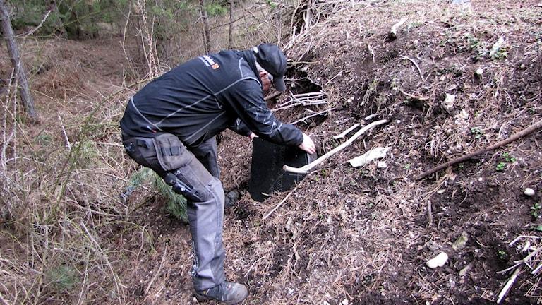 Förman Lars Olof Malmquist gräver fram en gravsten ur komposthögen. Foto: Lasse Ahnell/Sveriges Radio.